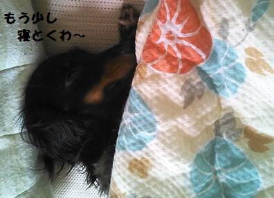 94_marofuku_131025.jpg