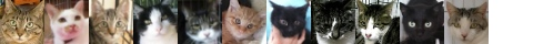 131213cats-s
