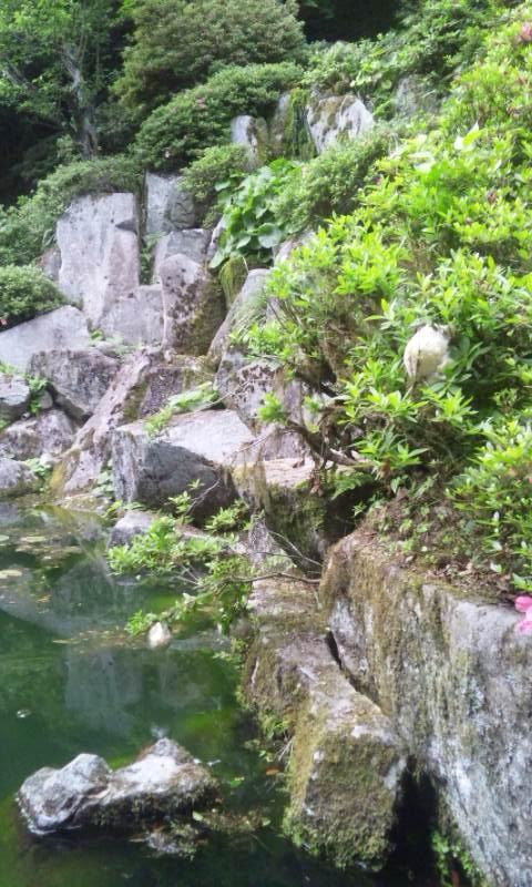 長松寺の庭園にモリアオガエルの卵が