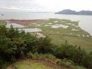 順天湾の湿地