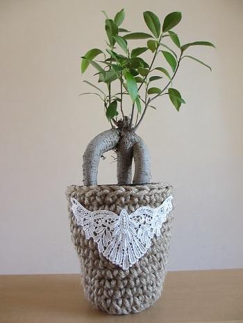 2013.10鉢カバー ガジュマル