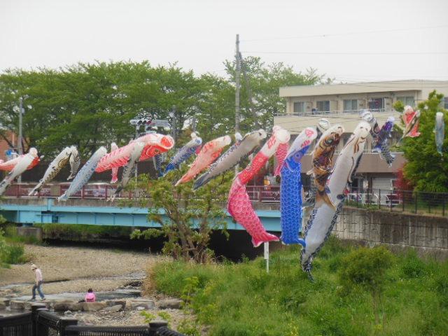 空堀川の鯉のぼり1