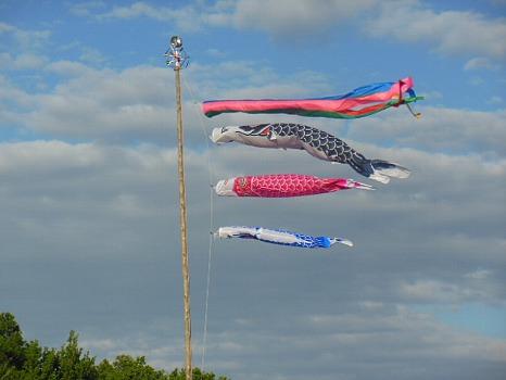五月の空の鯉のぼり