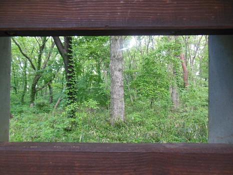 野鳥観察の窓