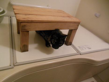 風呂場のアビ