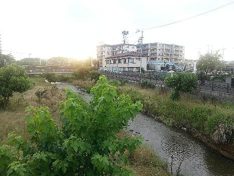 空堀川の梅雨