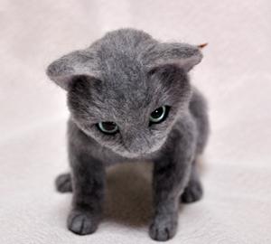 ロシアンブルー猫131225 055
