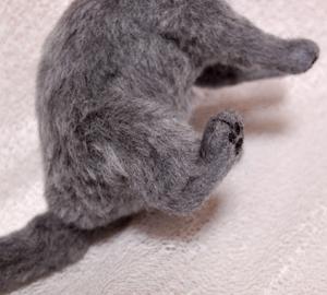 ロシアンブルー猫131225 047