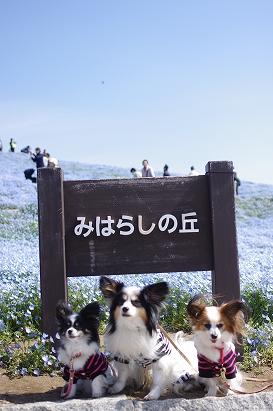 みはらしの丘2013.4.28