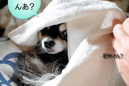 冬眠ポテト