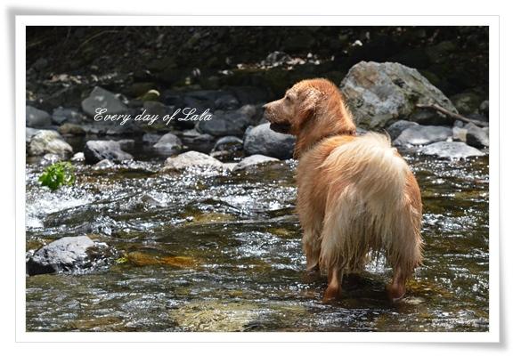 秘密基地の川へ。201305