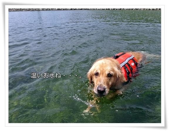 温いお水201308