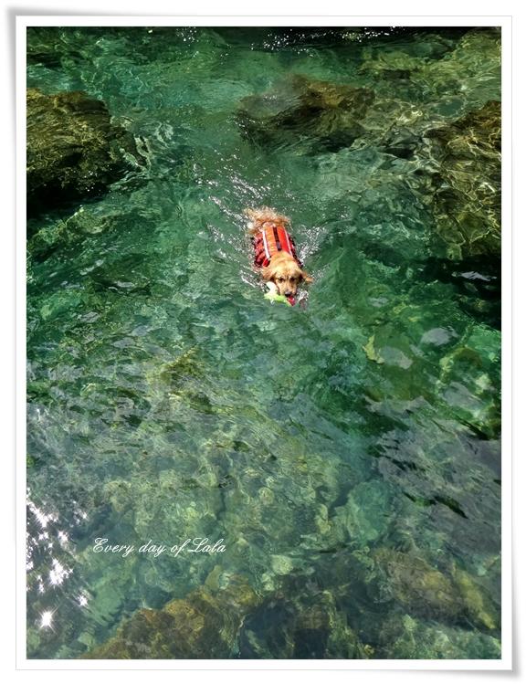 泳ぐじょじょ201308