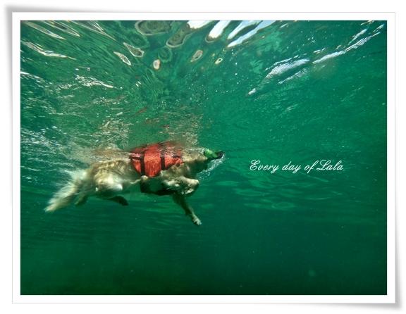 水中写真1201308
