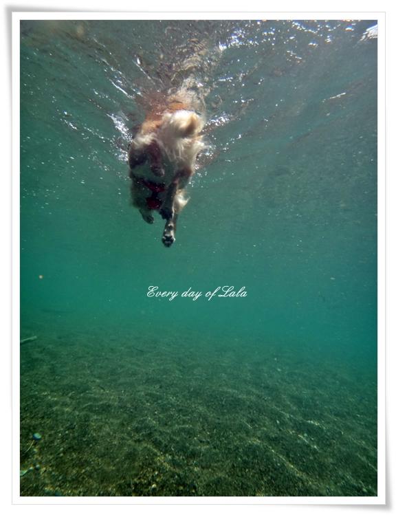 水中写真2201308