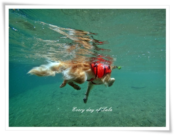 水中写真3201308
