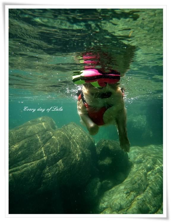 ララ今回も泳いでます201308