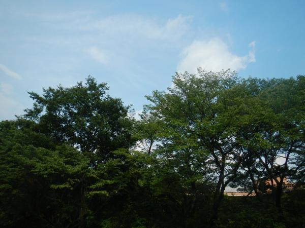 八国山緑地 043