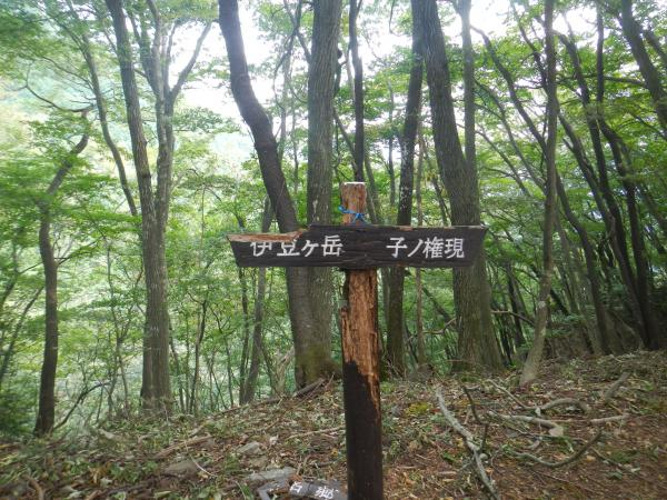 伊豆ヶ岳、子ノ権現 069