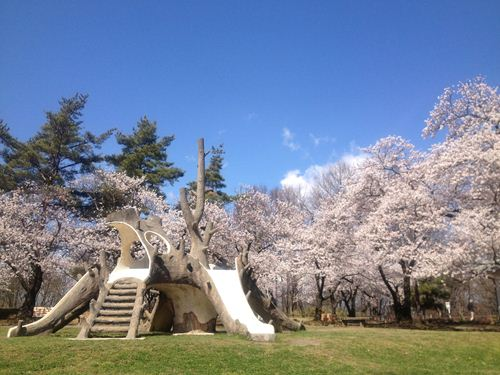 雪の後の桜2