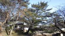 ルイージのだんぼーる★はうす-SBSH09671.JPG