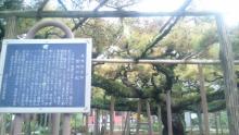 ルイージのだんぼーる★はうす-SBSH0374.JPG