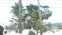 ルイージのだんぼーる★はうす-SBSH0776.JPG