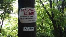 ルイージのだんぼーる★はうす-SBSH10391.JPG