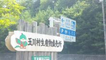 ルイージのだんぼーる★はうす-SBSH0479.JPG