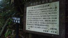 ルイージのだんぼーる★はうす-SBSH0930.JPG