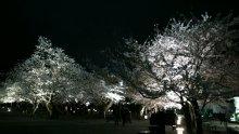 るいーじのだんぼーる★はうす-DSC_0591.JPG