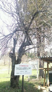 るいーじのだんぼーる★はうす-DSC_0630.JPG