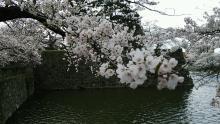 るいーじのだんぼーる★はうす-DSC_0663.JPG