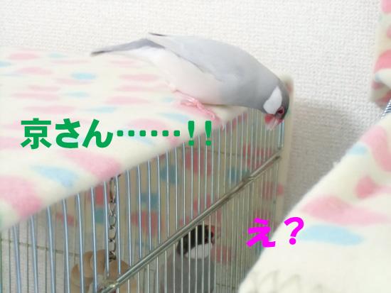 お母さんだよ~!!