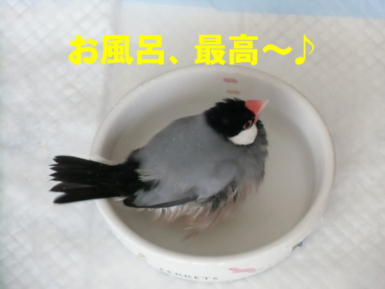 お風呂最高~