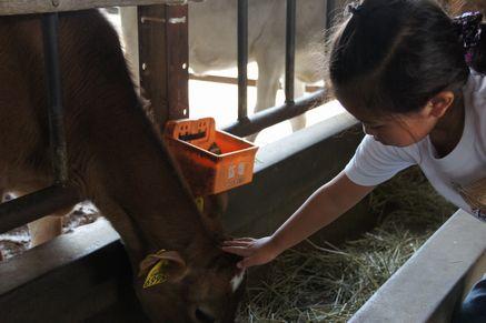 ミルク牧場2