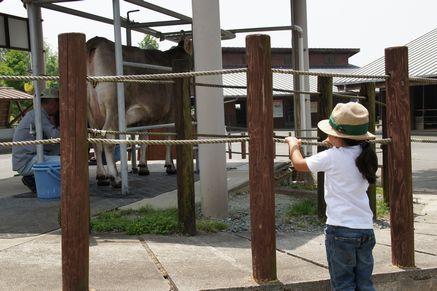 ミルク牧場4