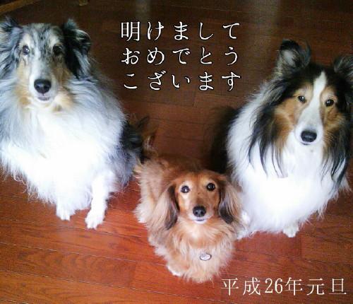 2014-01-01-10-33-05_deco_3.jpg