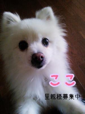 2014-01-01-11-08-29_deco_2.jpg