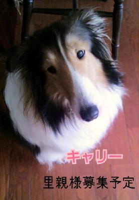 2014-01-01-11-17-21_deco_2.jpg