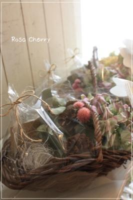 Rosa Cherry-2