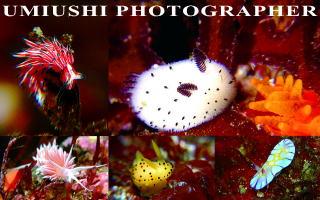 umiushiphotographerSP2.jpg