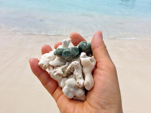 サンゴ礁sscc