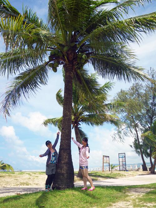 ココス島ヤシの木cc