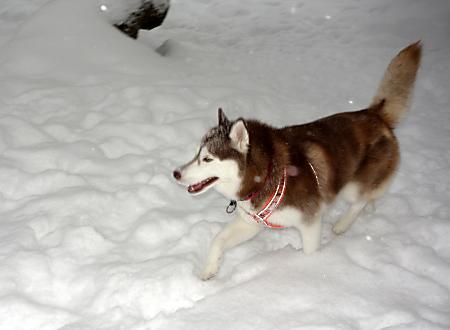 たっぷりの雪!