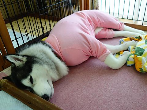 おパジャマ