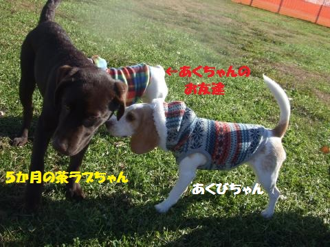 039_convert_20131224005124.jpg