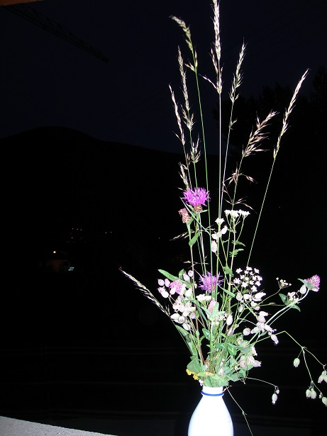 写真 野草