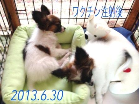 コピー ~ _130630