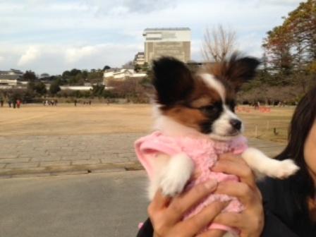修復中の姫路城とシェリ